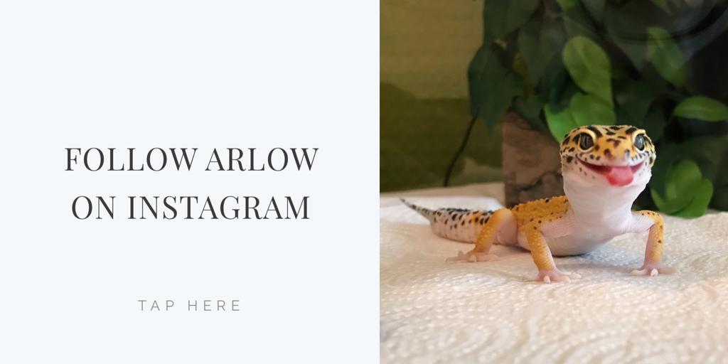 follow-arlow-on-instagram
